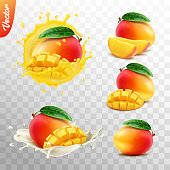 3d realistic transparent isolated vector set, whole and slice of mango fruit, mango in a splash of juice with drops, mango in a splash of milk or yogurt