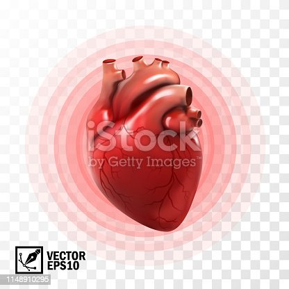 3d realistic vector isolated human heart, circle pulsation, heart attack , anatomically correct heart with venous system