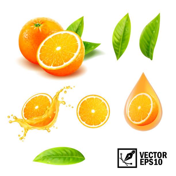 bildbanksillustrationer, clip art samt tecknat material och ikoner med 3d i realistisk vektor uppsättning element (hela apelsin, skivad apelsin, stänkskydd apelsinsaft, droppe orange olja, blad). redigerbara handgjorda mesh - apelsin