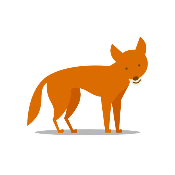a Dingo vector art illustration