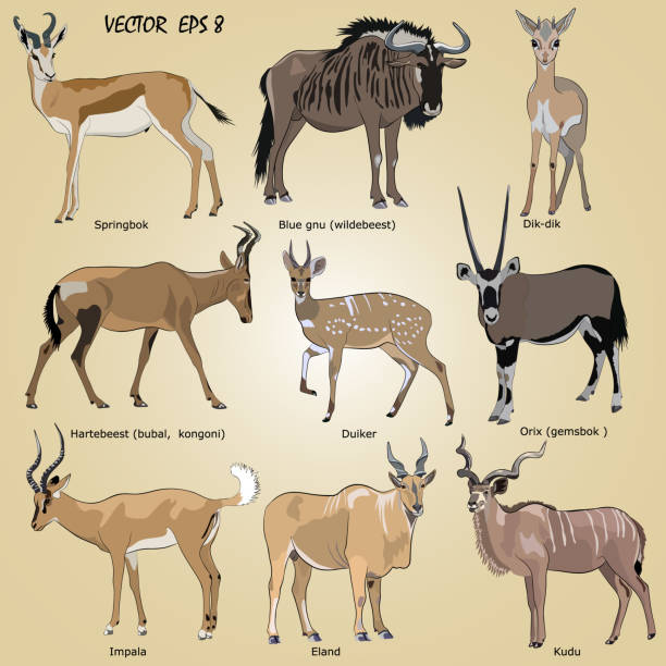 Royalty Free Kudu Clip Art, Vector Images & Illustrations