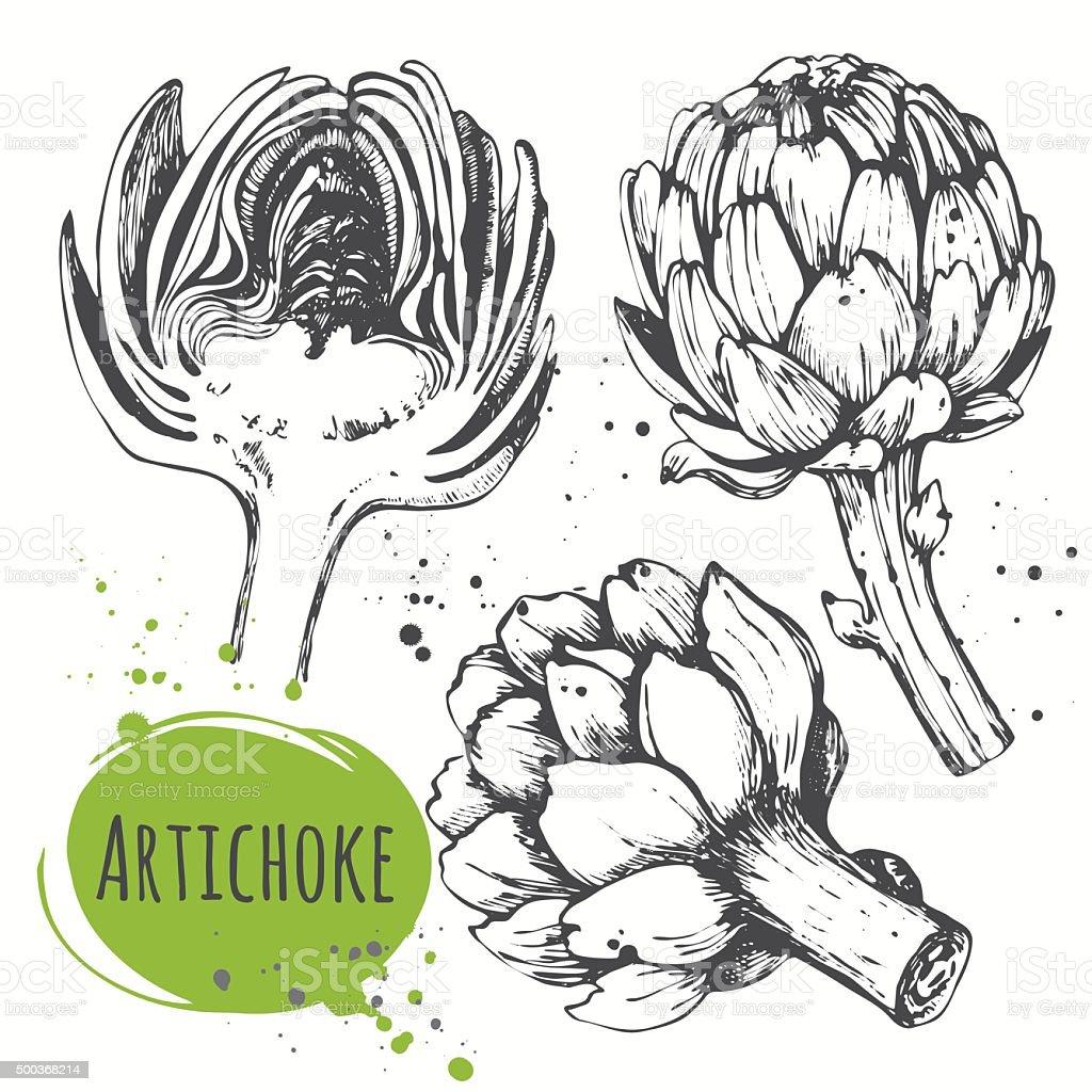 Aartichoke. Set of hand drawn artichoke. Fresh organic food. vector art illustration