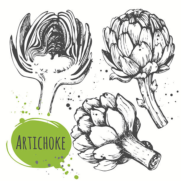 Aartichoke. Set of hand drawn artichoke. Fresh organic food. Vector illustration with sketch vegetable. Black and white. artichoke stock illustrations