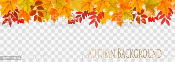 Abstract autumn panorama with colorful leaves on transparent vector vector id1025979454?b=1&k=6&m=1025979454&s=612x612&h=m1gajfykdn etziayzb7cbndggj4onem6bwx anr8yq=