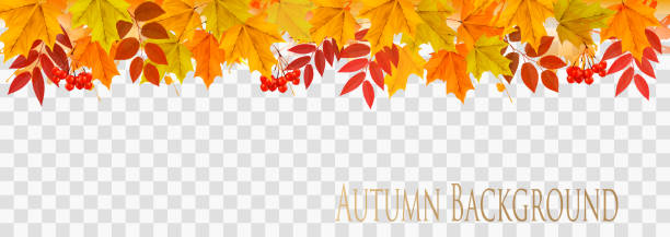 illustrazioni stock, clip art, cartoni animati e icone di tendenza di abstract autumn panorama with colorful leaves on transparent background vector - foglie