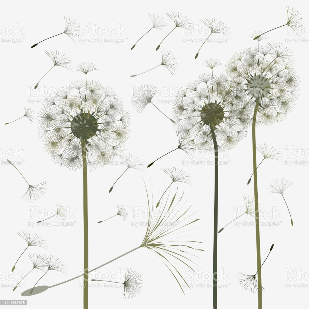 Abstract Background Of A Dandelion For Design Stock