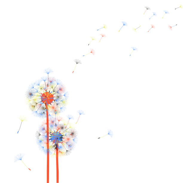 Dandelion Seed Illustrations, Royalty-Free Vector Graphics