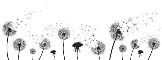Abstract black dandelion, dandelion with flying seeds illustration - for stock Abstract black dandelion, dandelion with flying seeds illustration - for stock pollen stock illustrations