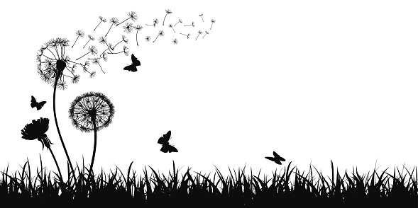 Abstract black dandelion silhouette, flying seeds of dandelion, butterfly, grass, field, nature eco background - stock vector