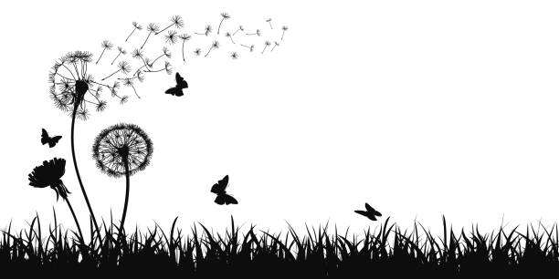 Abstract black dandelion silhouette, flying seeds of dandelion, butterfly, grass, field, nature eco background - stock vector Abstract black dandelion silhouette, flying seeds of dandelion, butterfly, grass, field, nature eco background - stock vector annotation stock illustrations
