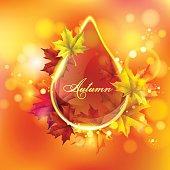 Autumn leaves of maple.