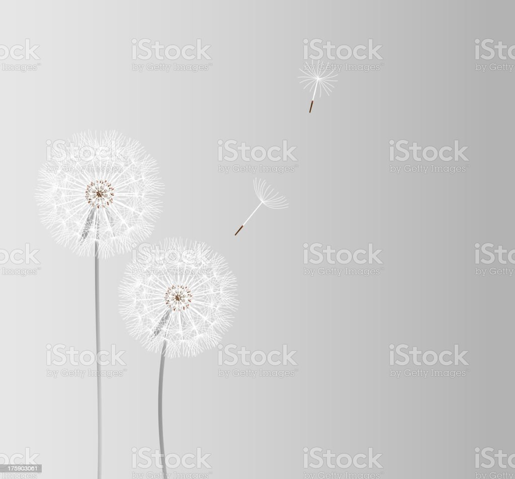 Abstract Dandelion Background Vector Illustration Stock