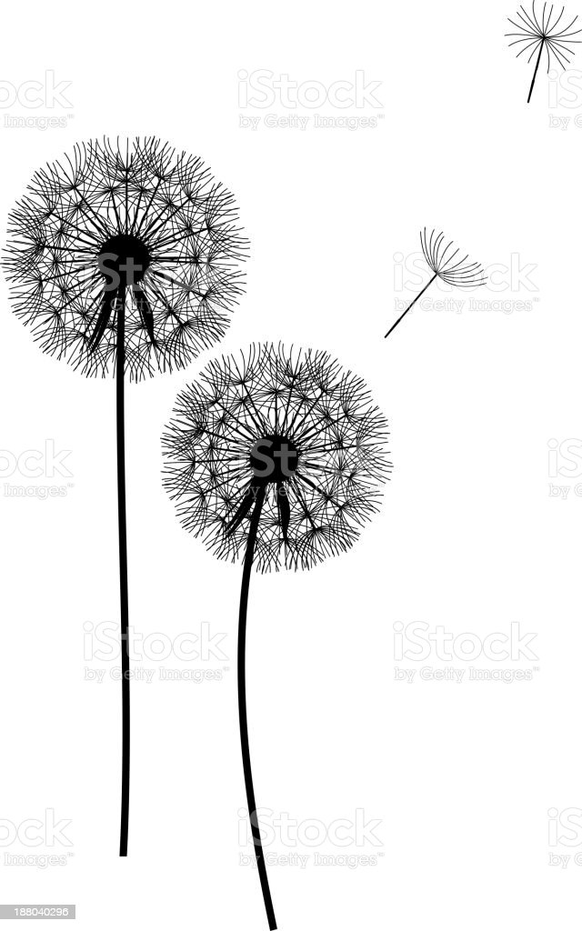 abstract dandelion background  vector illustration royalty-free stock vector art
