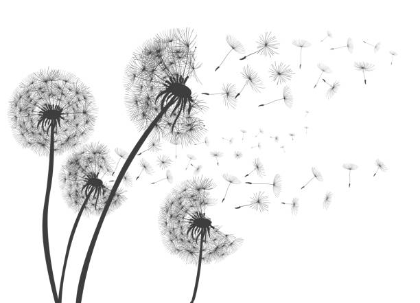 Abstract Dandelions dandelion with flying seeds – for stock Abstract Dandelions dandelion with flying seeds – for stock pollen stock illustrations