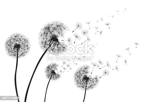 Abstract Dandelions dandelion with flying seeds – vector