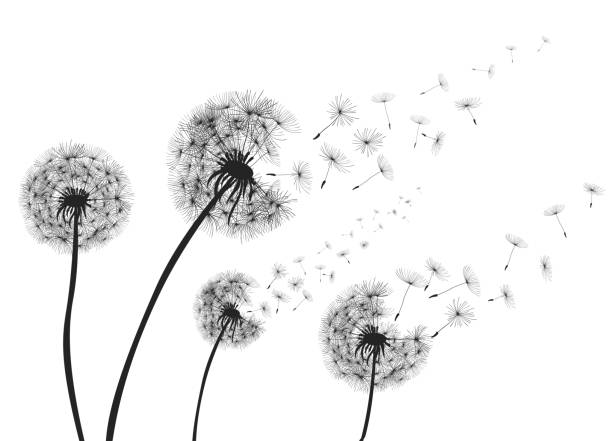 Abstract Dandelions dandelion with flying seeds – vector vector art illustration