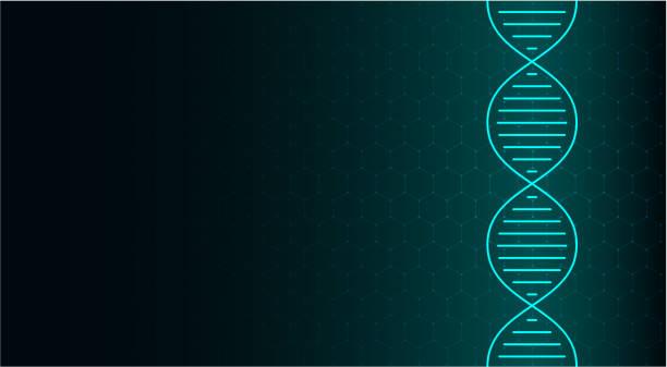 abstraktes dna-molekül, neonhelix auf grünem hintergrund. medizinische wissenschaft, genetik, biotechnologie, chemie, biologie. - dna stock-grafiken, -clipart, -cartoons und -symbole