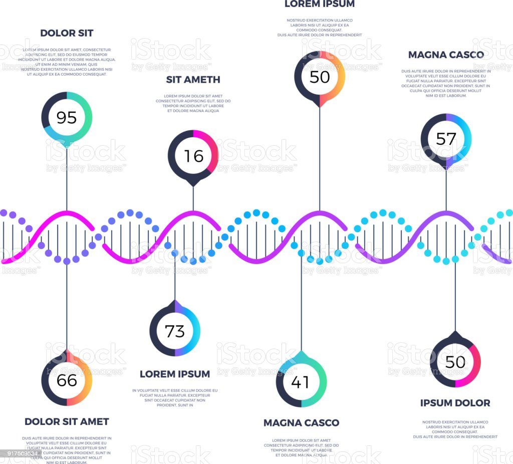 Abstract dna molecule vector business infographic with options vector art illustration