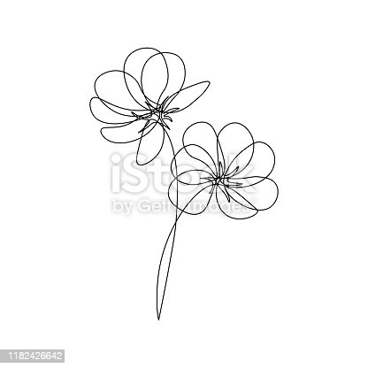 Cosmos flowers in continuous line drawing style. Black line sketch on white background. Vector illustration
