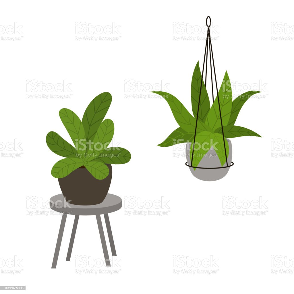 Abstract foliage houseplants in pots in modern decorative standing and hanging planters vector illustration royalty