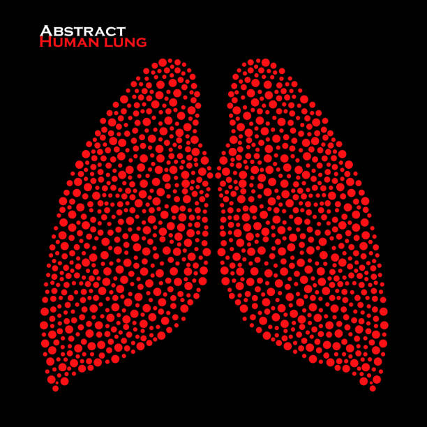 Abstract human lung. Vector illustration. Eps 10 Abstract human lung. Vector illustration. Eps 10 alveolus stock illustrations