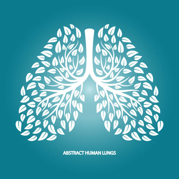 Abstract human lungs from foliage vector background Abstract human lungs from foliage vector background. Illustration of silhouette white foliage, thorax and bronchi human lung stock illustrations