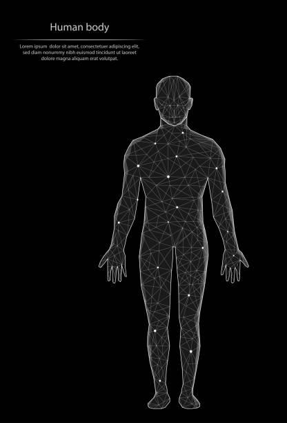 illustrazioni stock, clip art, cartoni animati e icone di tendenza di immagine astratta corpo umano sotto forma di linee e punti, costituito da triangoli e forme geometriche. sfondo vettoriale poli basso. - il corpo umano