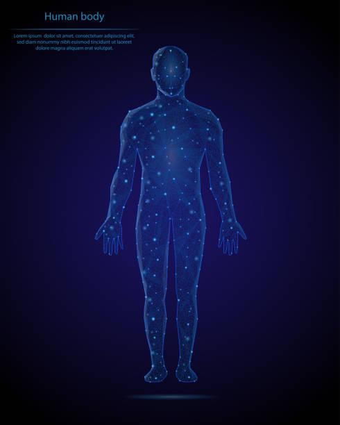 illustrazioni stock, clip art, cartoni animati e icone di tendenza di immagine astratta di un corpo umano sotto forma di cielo stellato o spazio, costituito da punti, linee e forme sotto forma di pianeti, stelle e universo. sfondo vettoriale poli basso. - il corpo umano