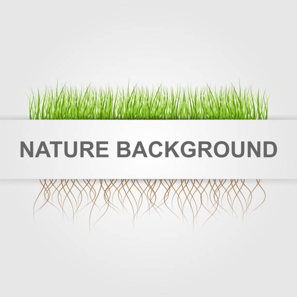 Abstract nature background. Green grass. vector art illustration