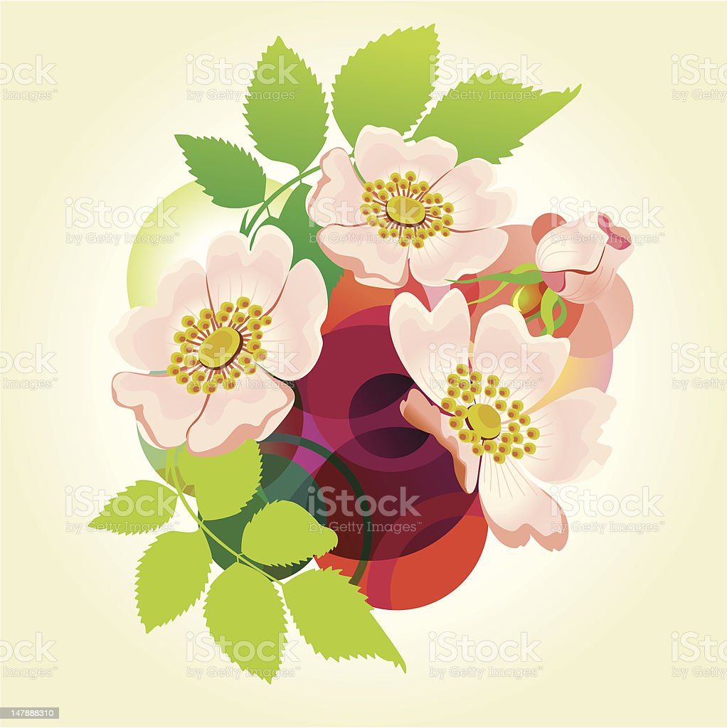 Abstract vector background with wild roses. royalty-free abstract vector background with wild roses stock vector art & more images of anniversary card