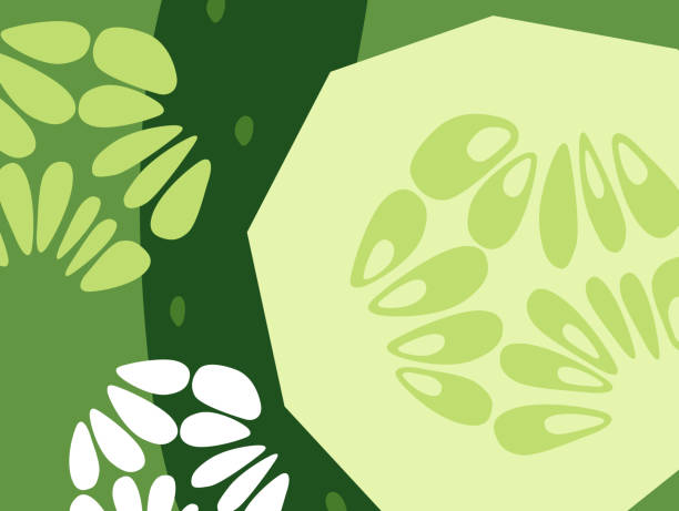 Abstract vegetable design in flat cut out style. Cucumbers. vector art illustration