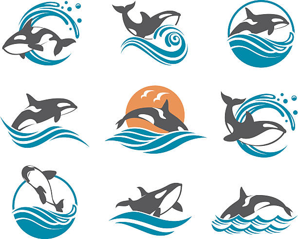 abstract whale icons set collection with abstract symbols of whale and sea wave killer whale stock illustrations