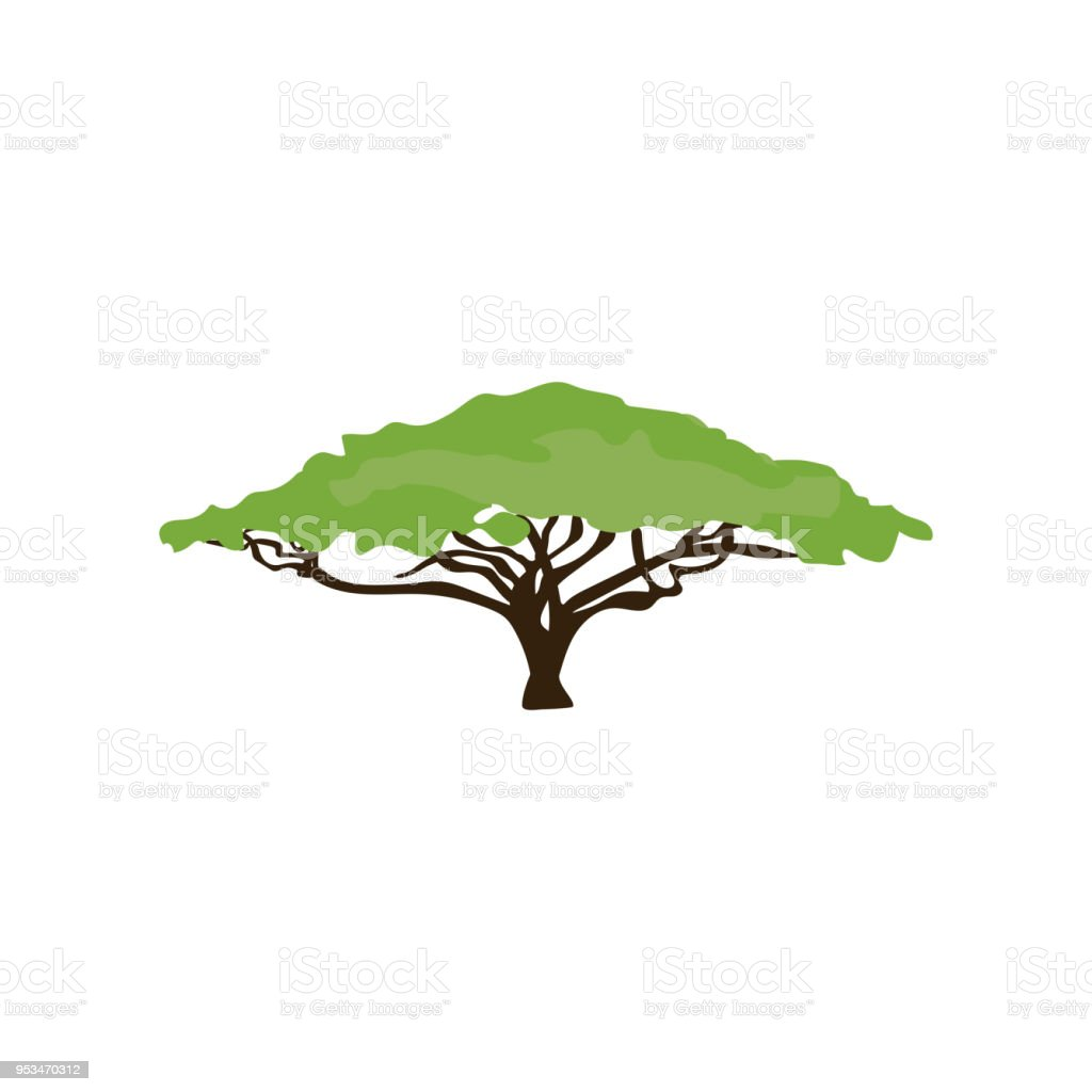 Acacia tree illustration