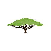 Acacia tree illustration