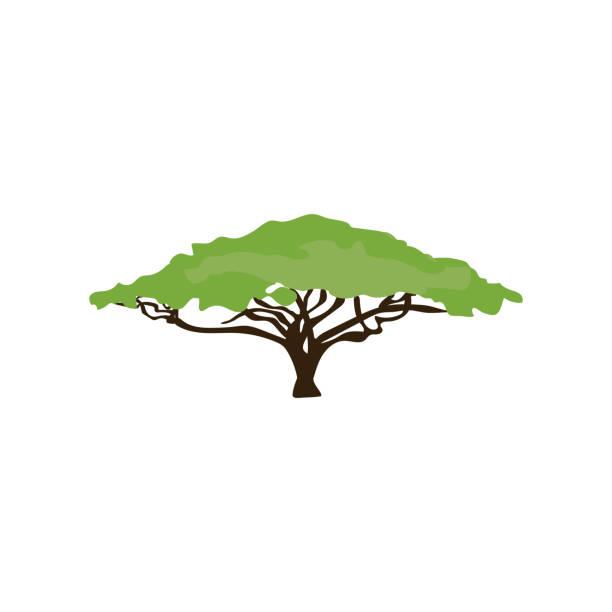 Acacia Tree Illustrations, Royalty-Free Vector Graphics ...