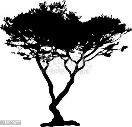 Tree silhouette, http://www.biologoart.com/is/tr.jpg