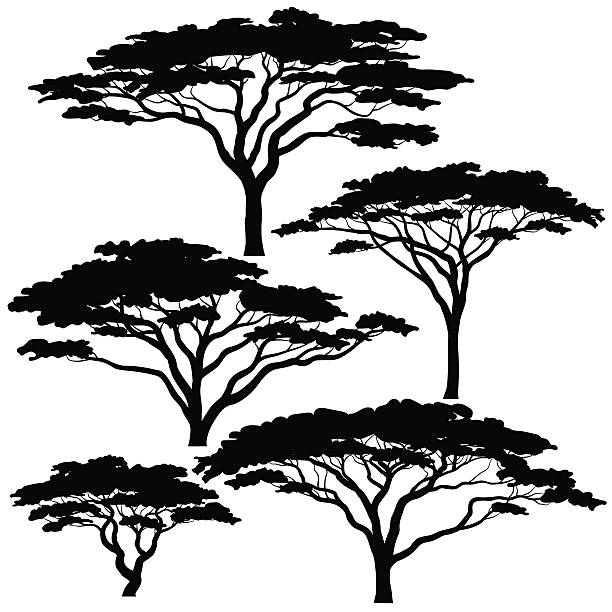 Acacia tree silhouettes vector art illustration