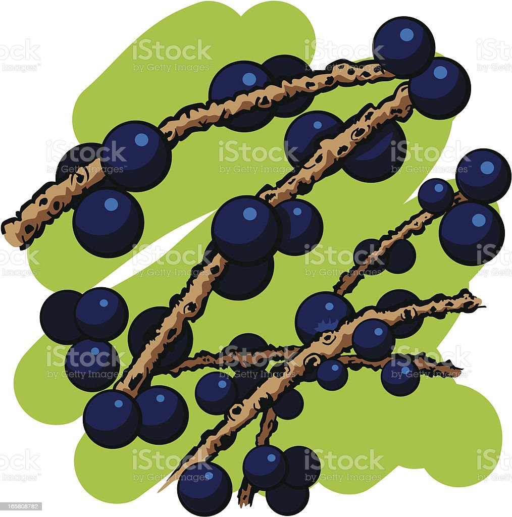 Acai Berries on branches royalty-free stock vector art