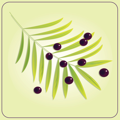 Acai Plant with Berries