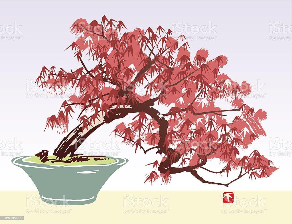 Acer Tree vector art illustration