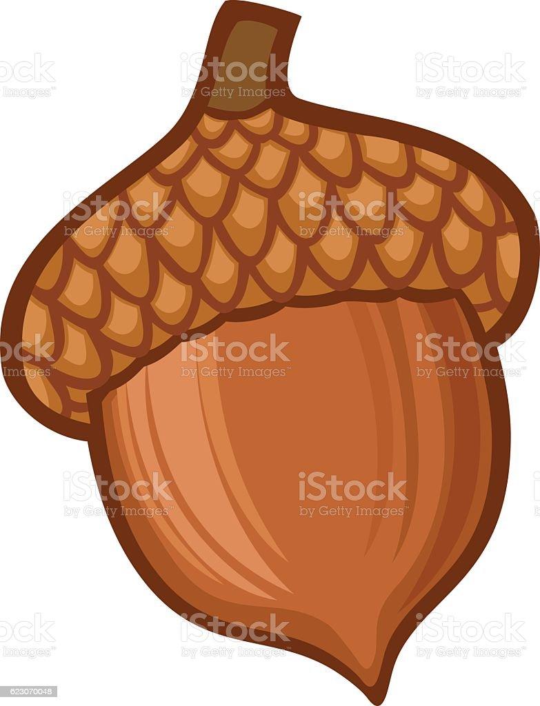 acorn illustration vector art illustration