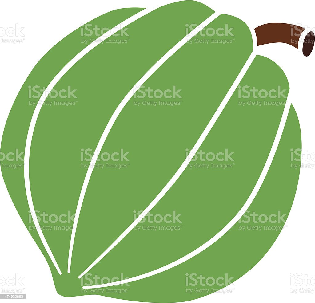 acorn squash in color vector art illustration