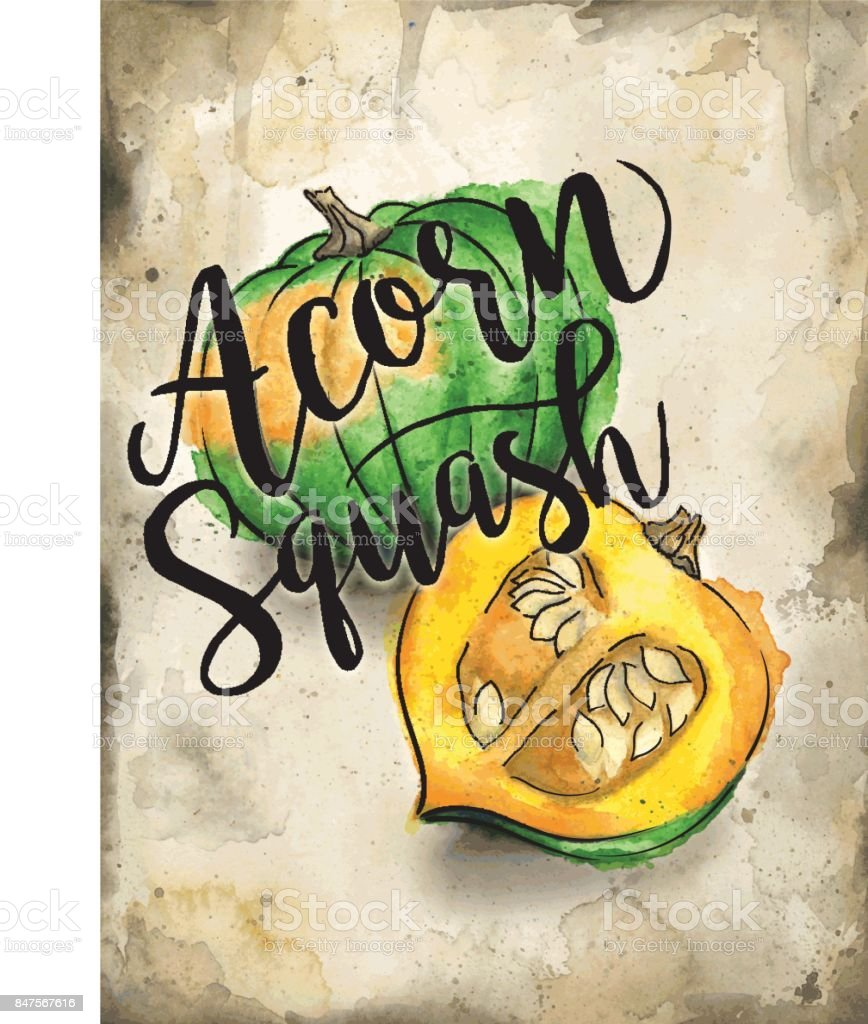 Acorn Squash Painted in Watercolor on Rustic Brown Background. Vector EPS10 vector art illustration