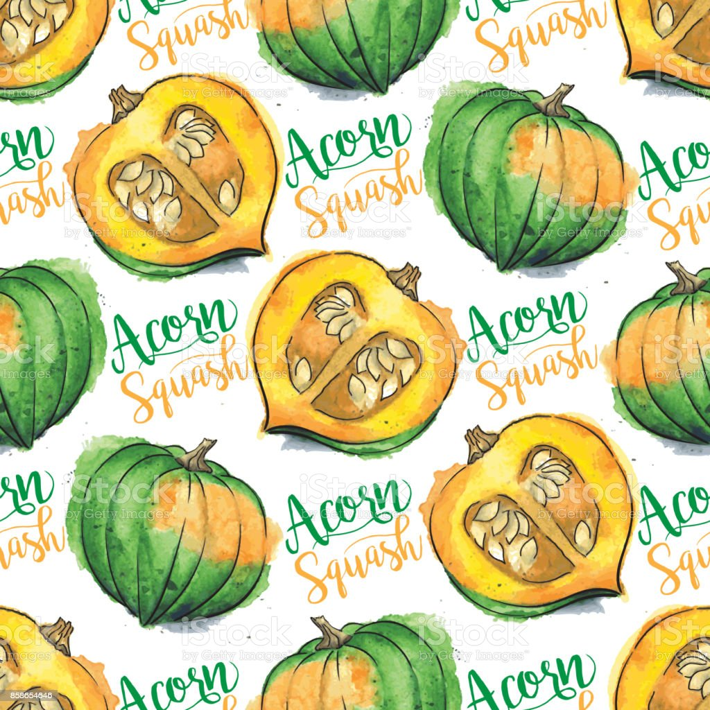 Acorn Squash Watercolor Vector Seamless Pattern With 'Acorn Squash' Calligraphic Text vector art illustration