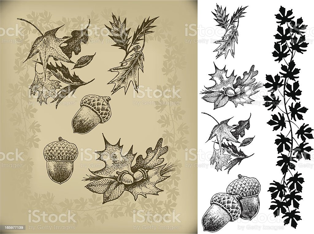 Acorns and Autumn Leaves royalty-free acorns and autumn leaves stock vector art & more images of acorn