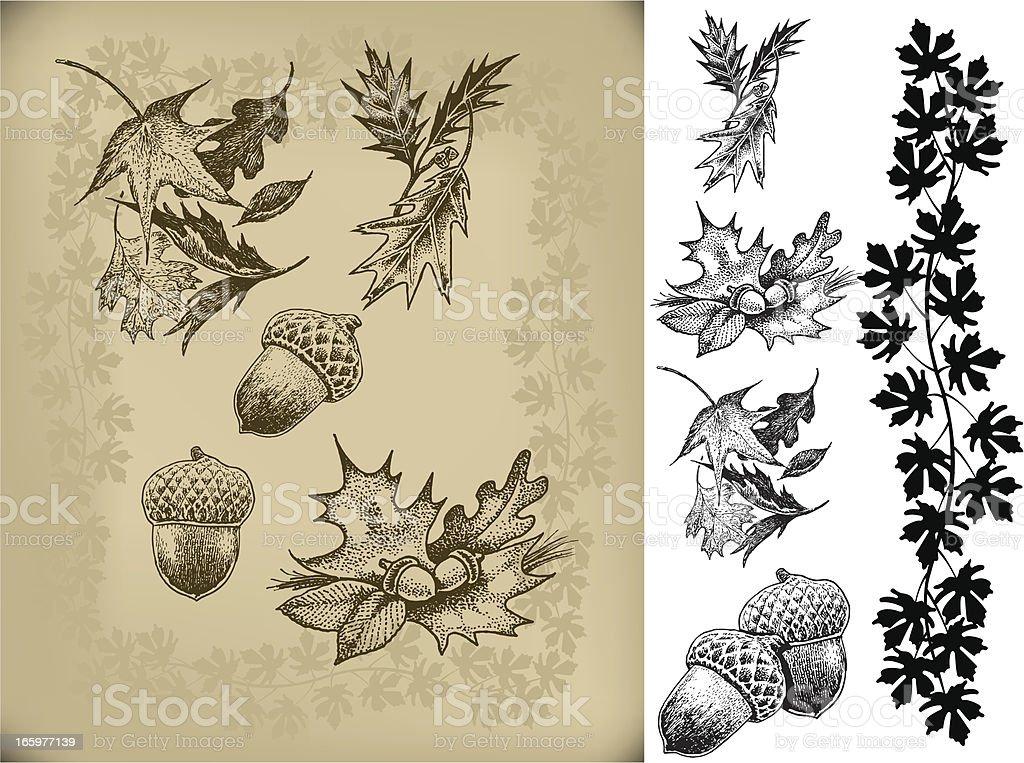 Acorns and Autumn Leaves vector art illustration