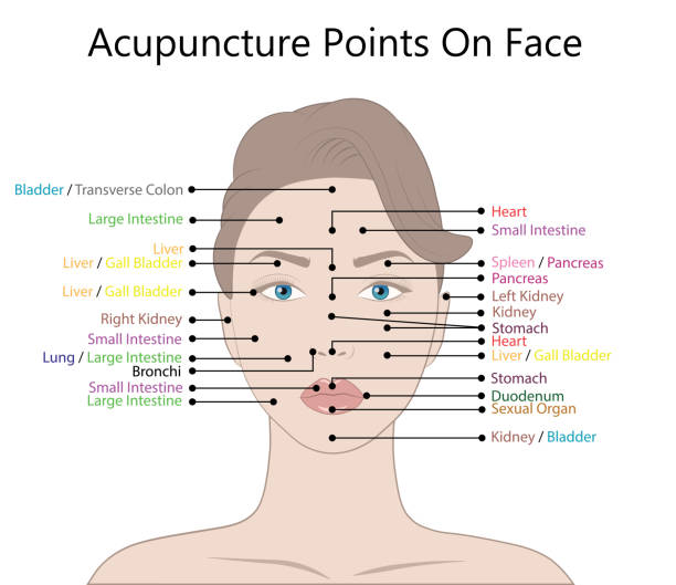 illustrations, cliparts, dessins animés et icônes de points actifs d'acupuncture sur le visage, illustration de vecteur - acupuncture