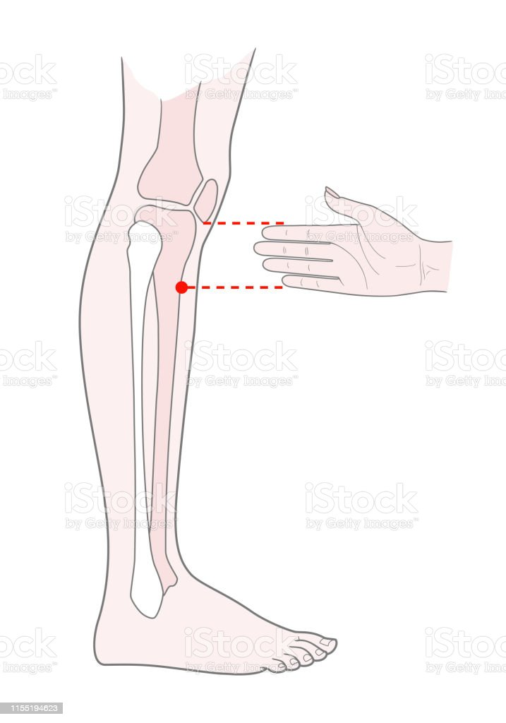 Active Acupuncture Points On The Legs Below The Knee Vector