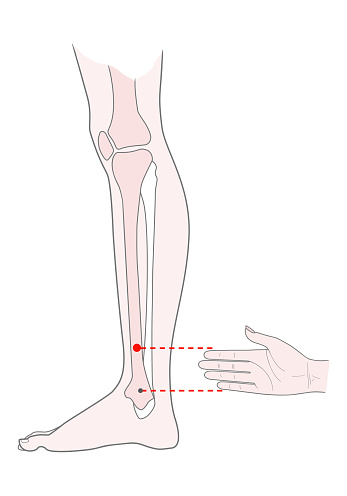 Active Acupuncture Points On The Legs Bove The Ankle Vector