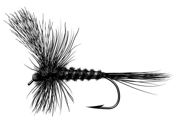 Adams Tied Fly An effective design for fly fishing in the northwest fishing bait stock illustrations